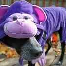 Purple Monkey by alina98