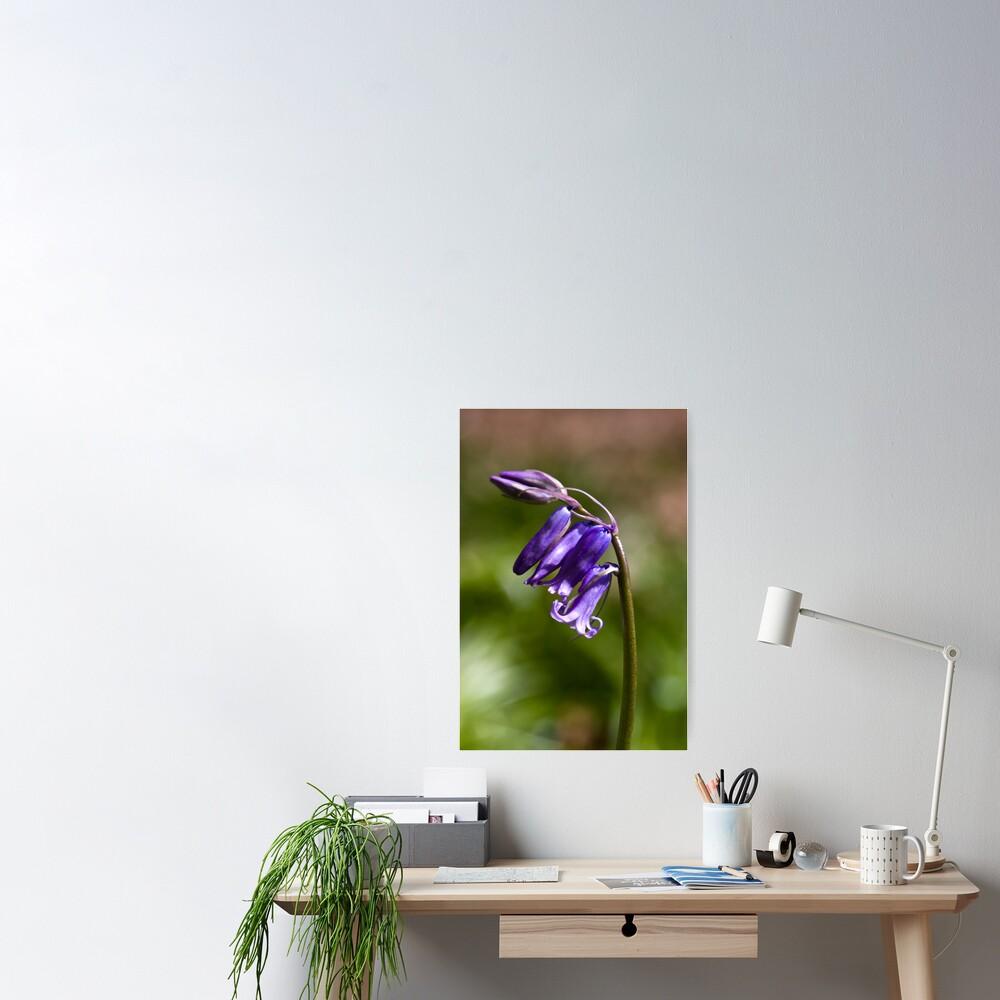 Bluebell (Hyacinthoides non-scripta) Poster