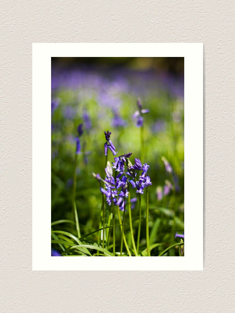 Alternate view of Bluebells (Hyacinthoides non-scripta) Art Print