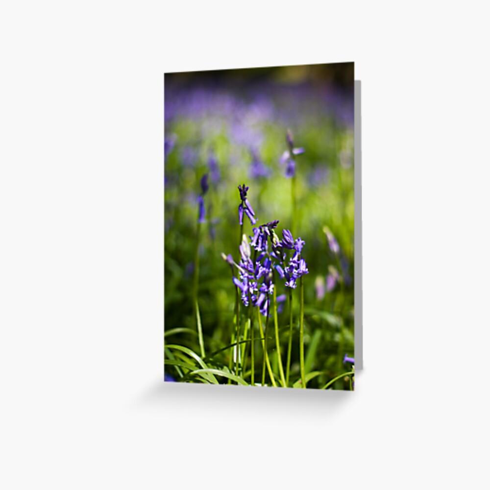 Bluebells (Hyacinthoides non-scripta) Greeting Card