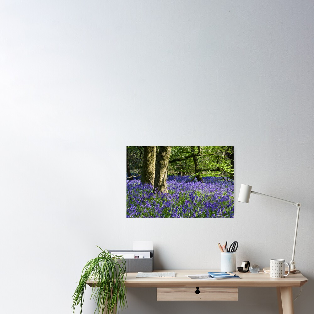 Bluebell Wood (Hyacinthoides non-scripta) Poster