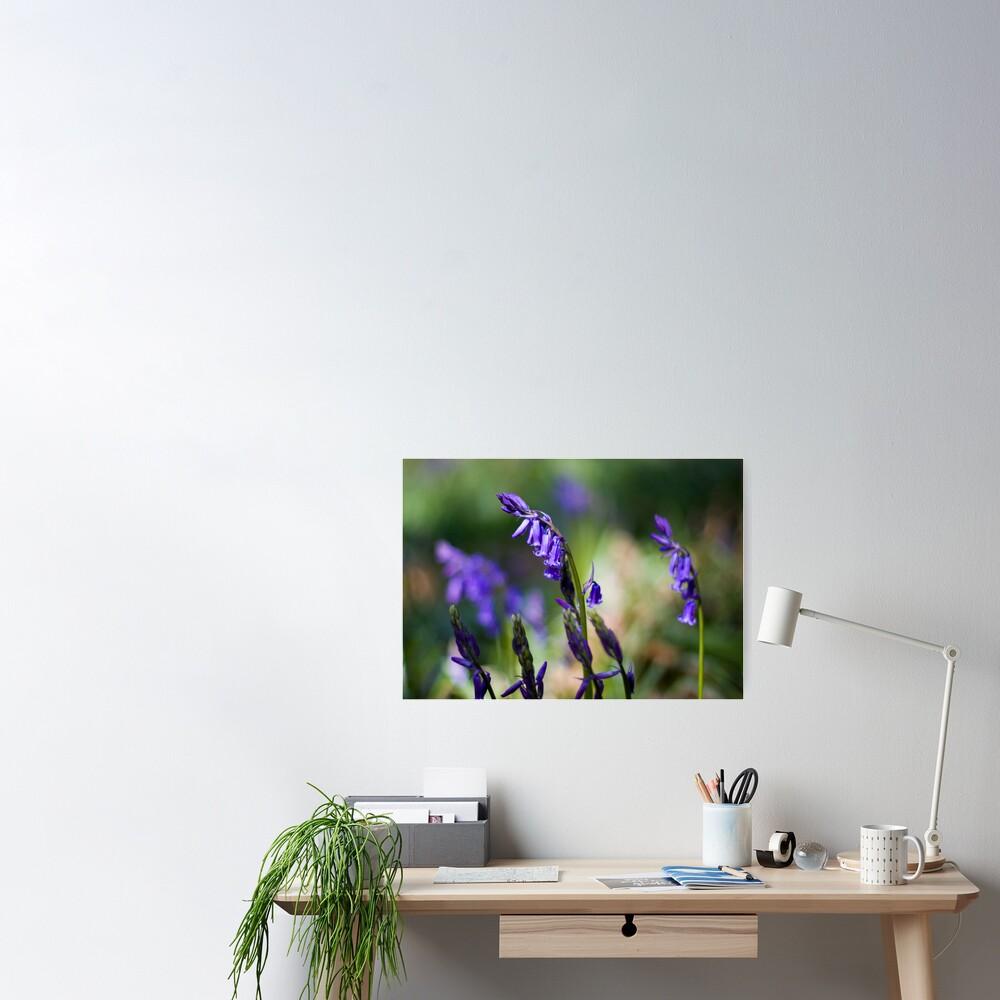 Bluebells (Hyacinthoides non-scripta) Poster