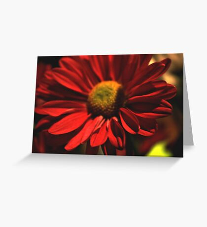 Red And Yellow Daisy Greeting Card