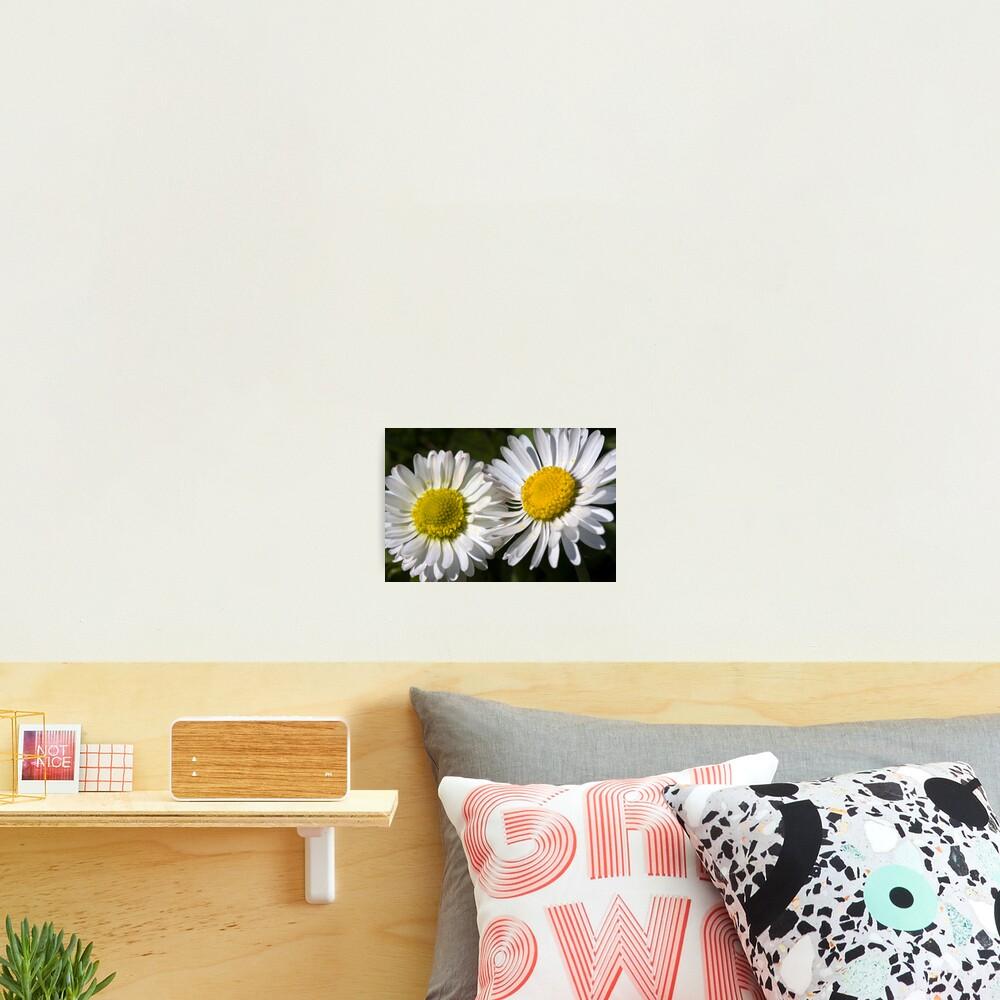 Daisies (Bellis perennis) Photographic Print