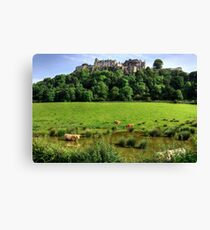 Cows in the Pool Canvas Print