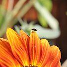 Fliege auf der Sonnenblume von LarryWintersohn