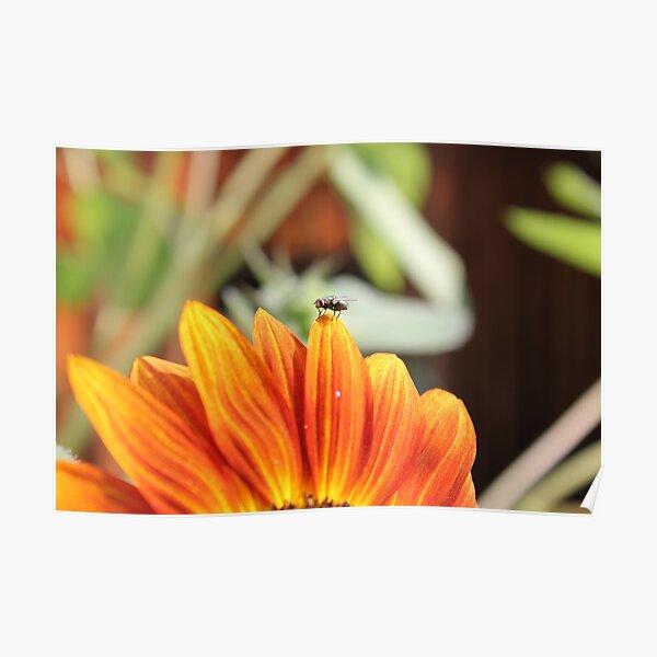 Fliege auf der Sonnenblume Poster