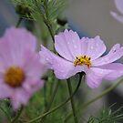 Blume nach einem Regenschauer von LarryWintersohn