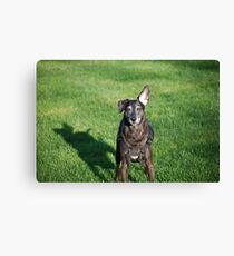 Scooby....  Canvas Print