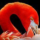 Flamingo's Best 2 by saseoche