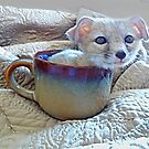 Cupa Coyote © by jansnow