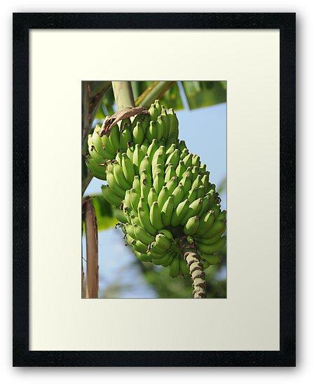 Bananas by AravindTeki