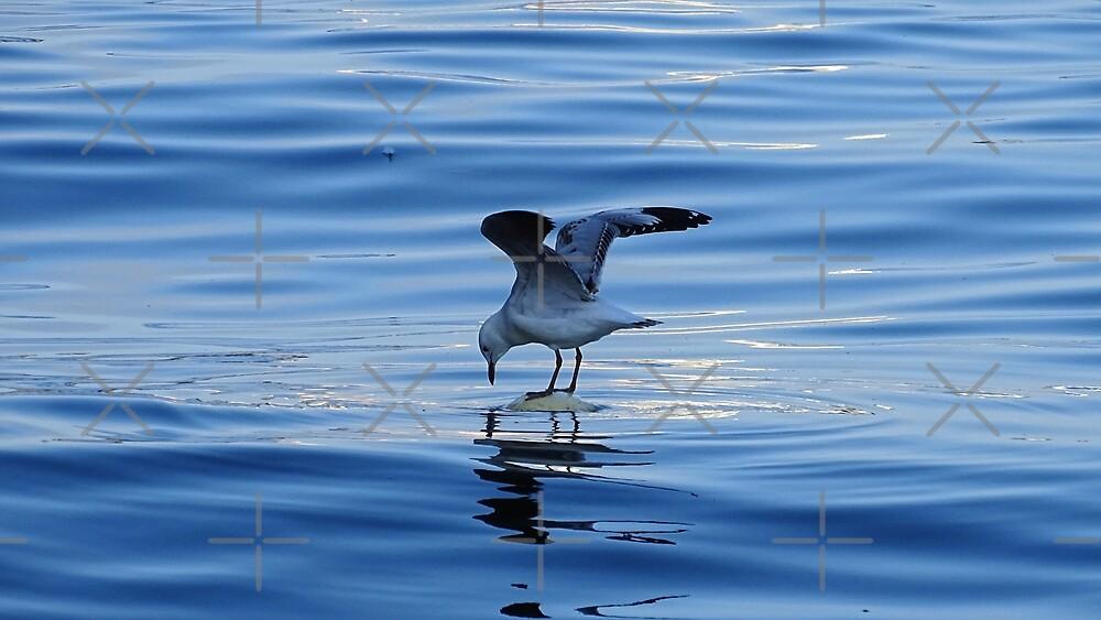Seagull  by Steven Guy