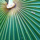 Palm cuba by sendao