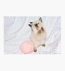 Goofy Kitty Photographic Print