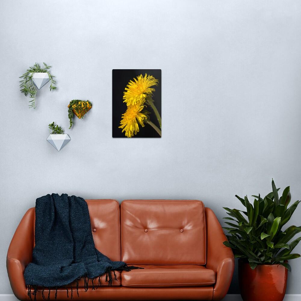 Three Dandelions (Taraxacum officinale) Metal Print