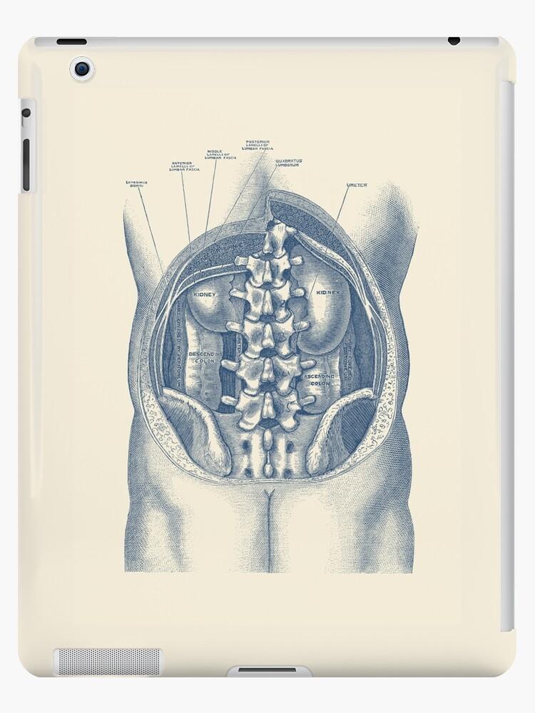 Vinilos y fundas para iPad «Diagrama de anatomía de riñón y colon ...