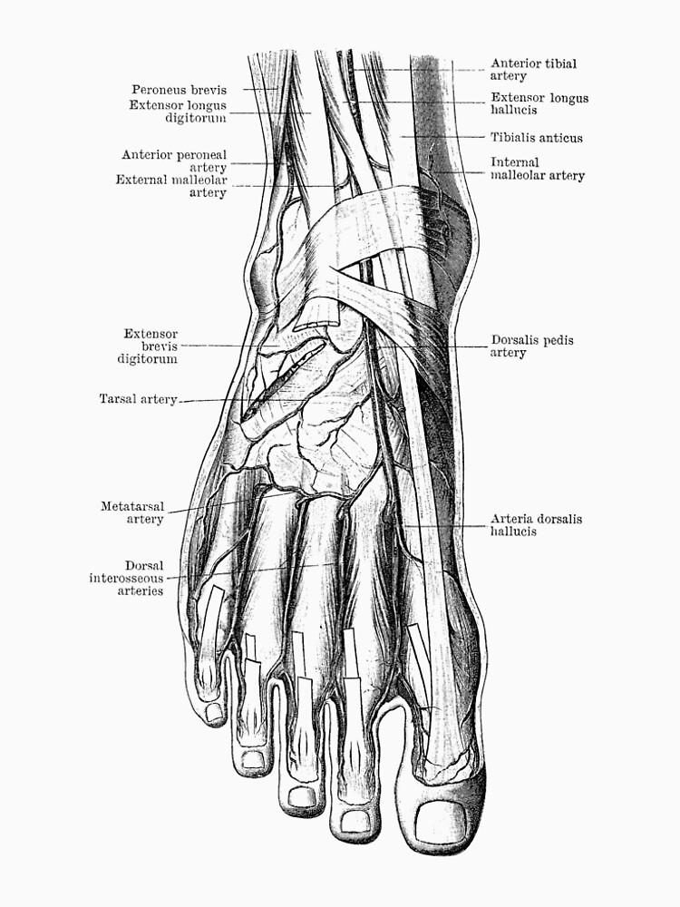 foot diagram human circulatory system women s premium t shirt by Knee Bones Diagram foot diagram human circulatory system by vaposters