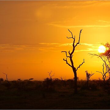 SATARA NUANETSI SUNSET -  KRUGER NATIONAL PARK by mags