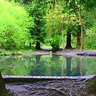forest pond by Gazzer