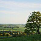 Tree-riffic View by Finbarr Reilly