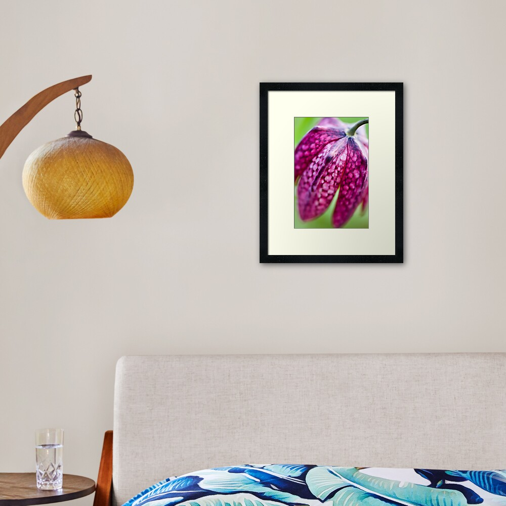 Fritillary (Fritillaria meleagris) Framed Art Print