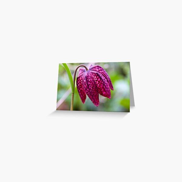 Fritillary (Fritillaria meleagris) Greeting Card
