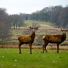 Deer Oh Deer by jonvin