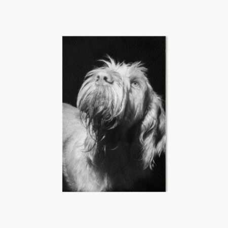 Looking up Spinone Art Board Print