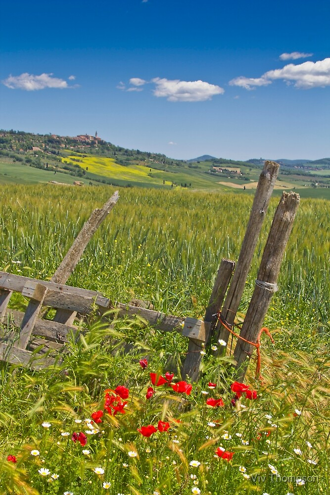 A View to Pienza by Viv Thompson