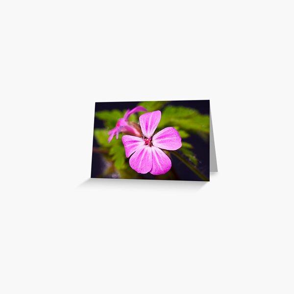 Herb Robert (Geranium robertianum) Greeting Card