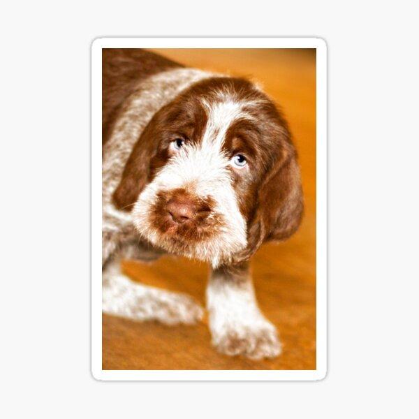 Brown Roan Italian Spinone Puppy Dog Sticker