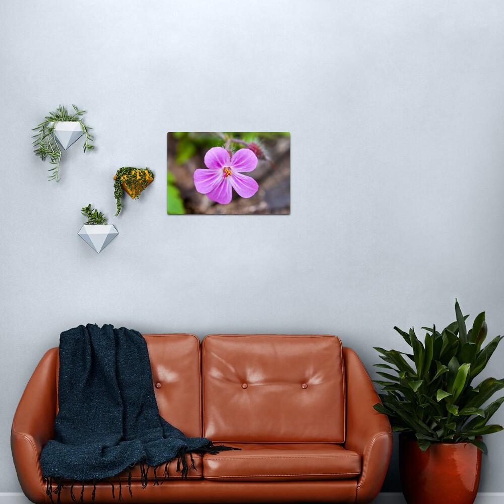 Herb Robert (Geranium robertianum) Metal Print