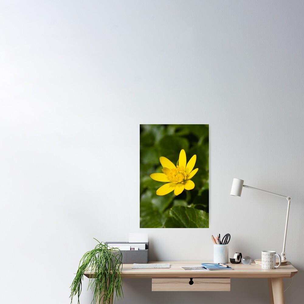 Lesser Celandine (Ranunculus ficaria) Poster