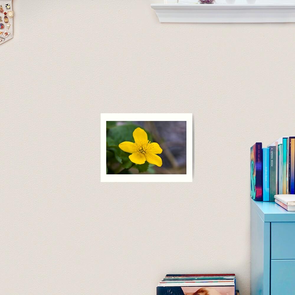 Lesser Celandine (Ranunculus ficaria) Art Print
