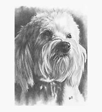 Schnoodle Photographic Print