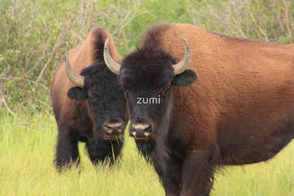 Bison attention by zumi