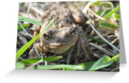Frogger by abelinc
