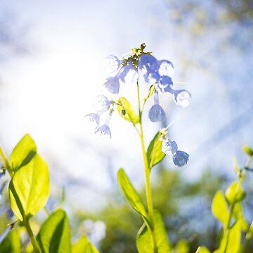 Morning Flowers by cyrenekrey