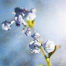 Flower Light by cyrenekrey