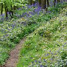 Bluebell Walk by dougie1
