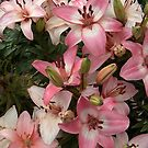 Gorgeous array of Pink and White Lilies in a Garden by Jillian Crider