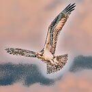 Fancy Flight by Kenneth Haley