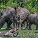 Save Us - Rhino by Deborah V Townsend