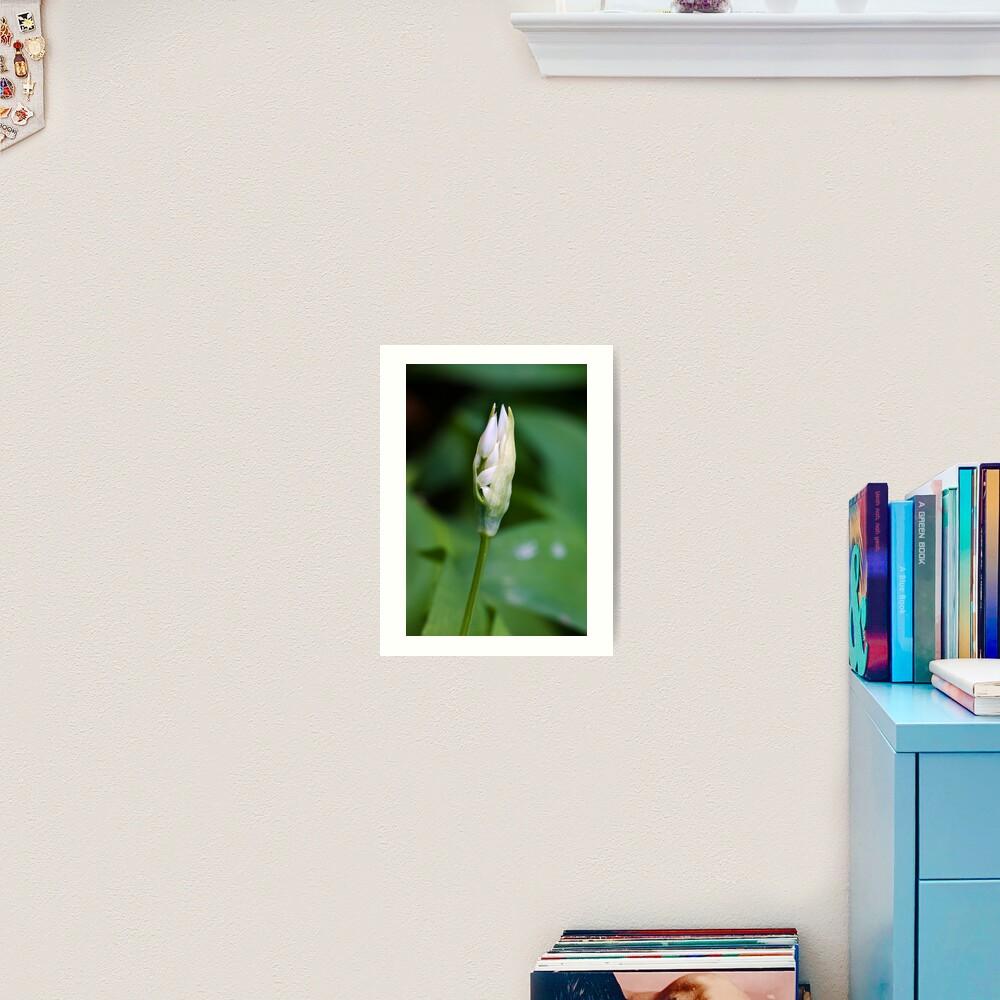 Ramson (Alium Ursinum) Art Print