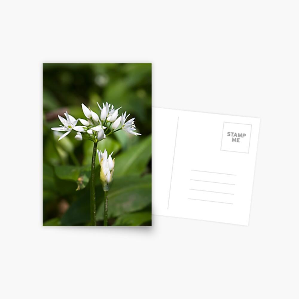 Ramson (Alium Ursinum) Postcard
