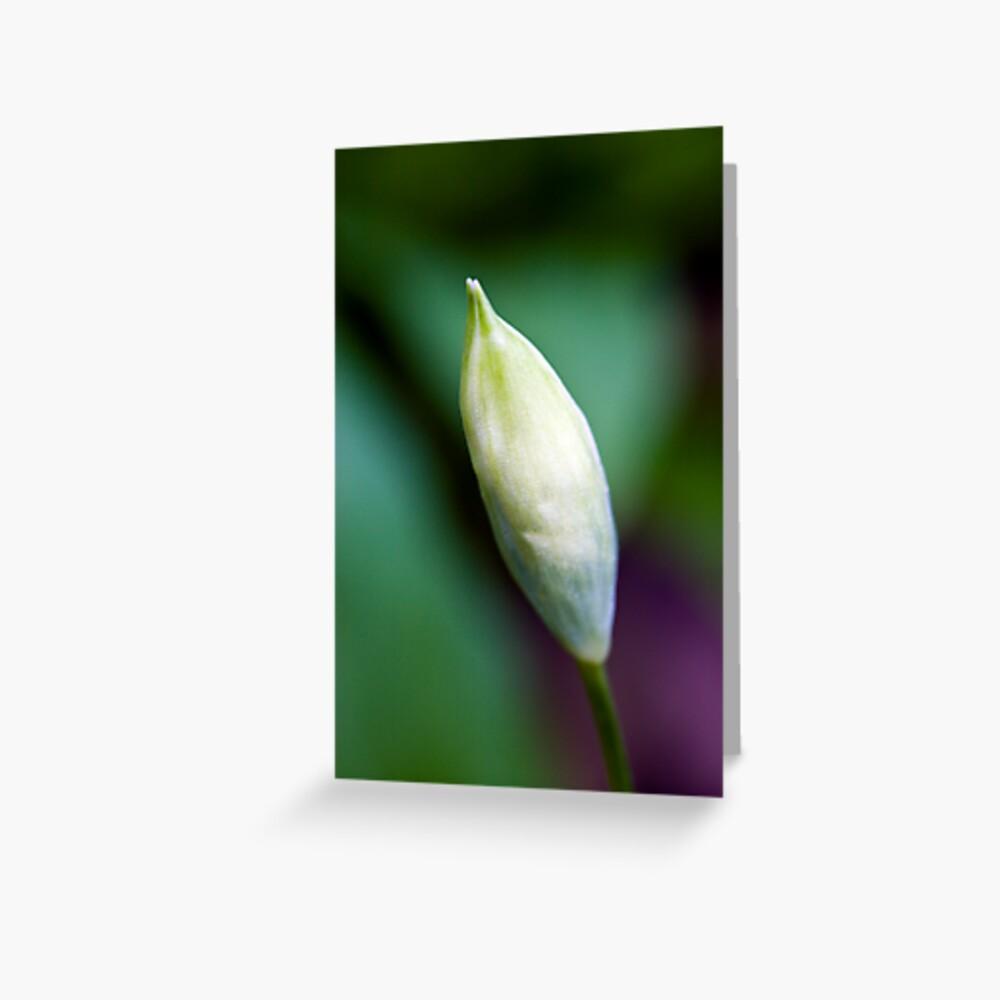 Ramson Bud (Allium ursinum) Greeting Card