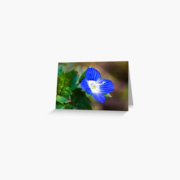 Common Field-speedwell (Veronica persica) Greeting Card