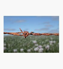 ......barbed Photographic Print