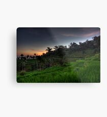 First Light over Rice Fields Metal Print